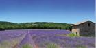 Glass_-_Landscape_-_Provence